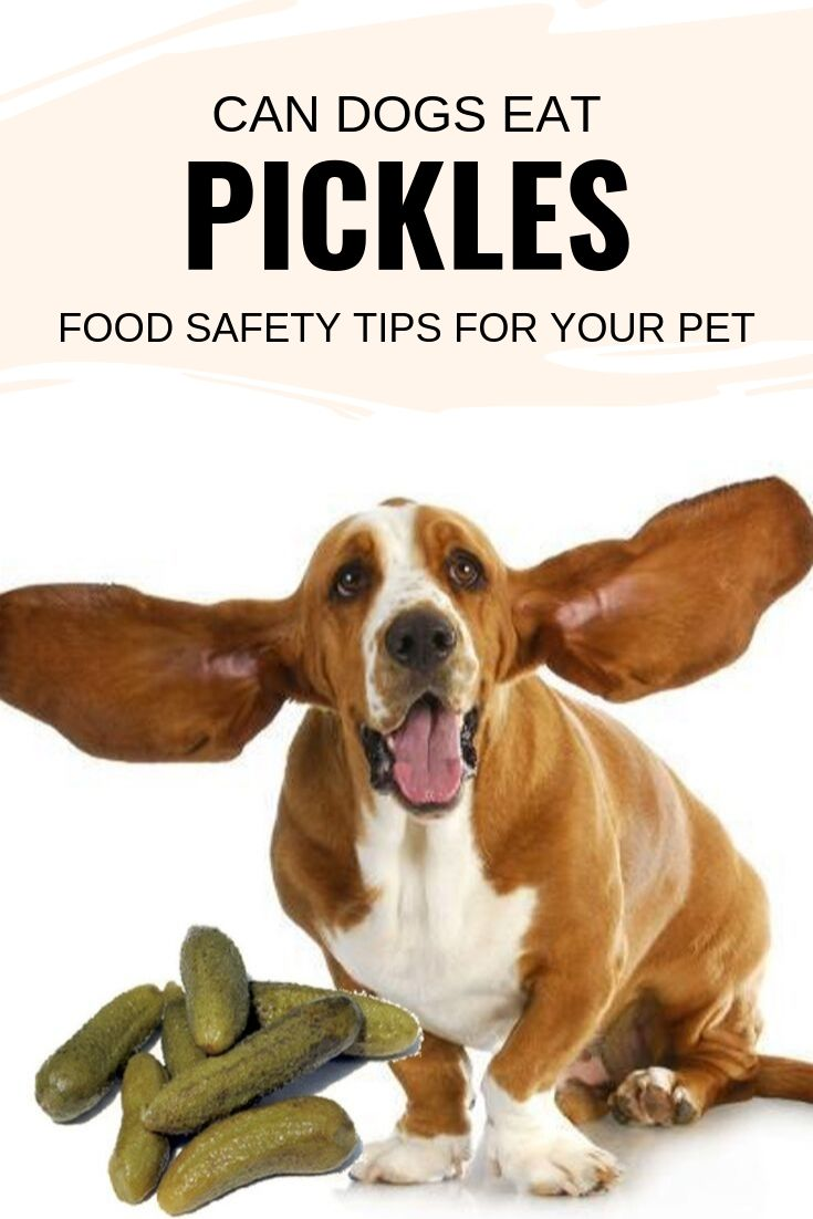 Can dogs eat pickles?