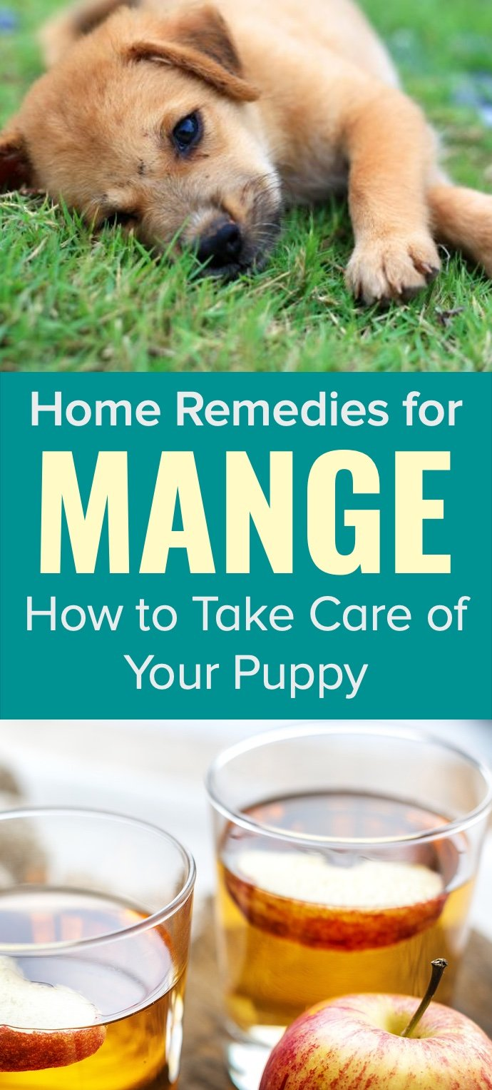 Home remedies for mange