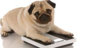dog lose weight