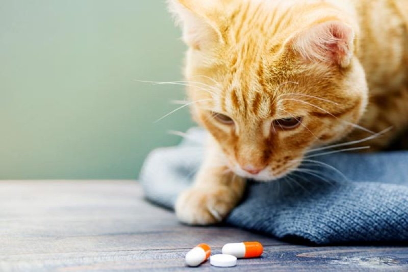 Probiotics for cats