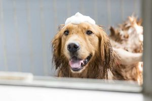dog with shampoo