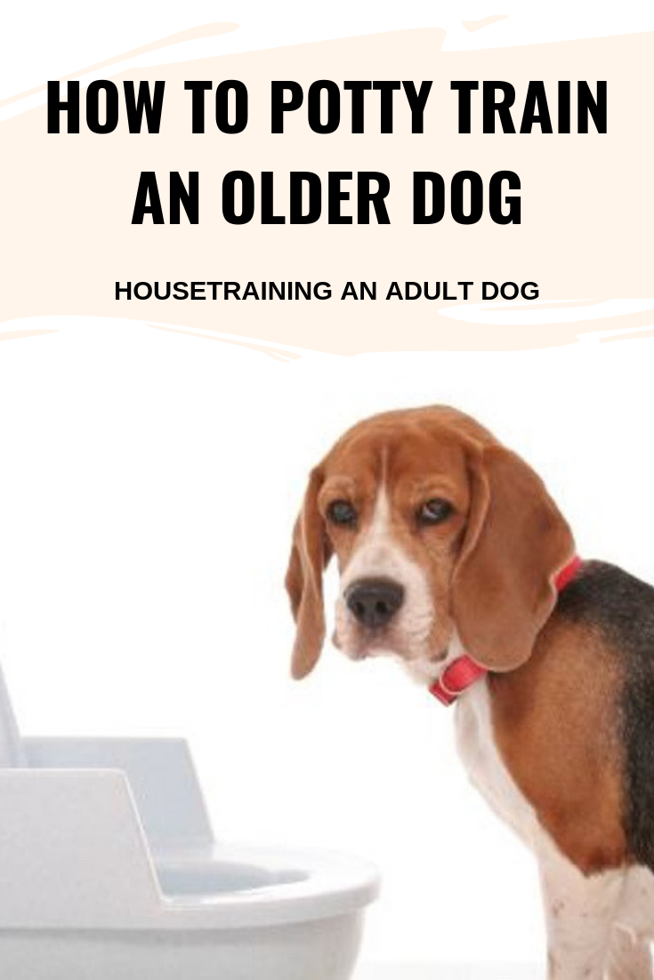 HOW TO POTTY TRAIN AN OLDER DOG