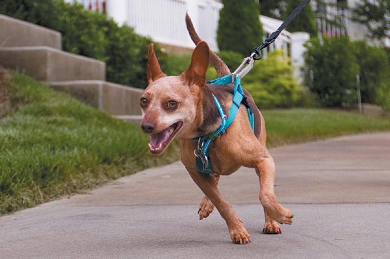stop leash pulling