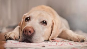 dog health warning signs