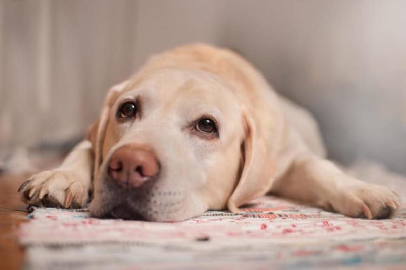 dog health warning signs