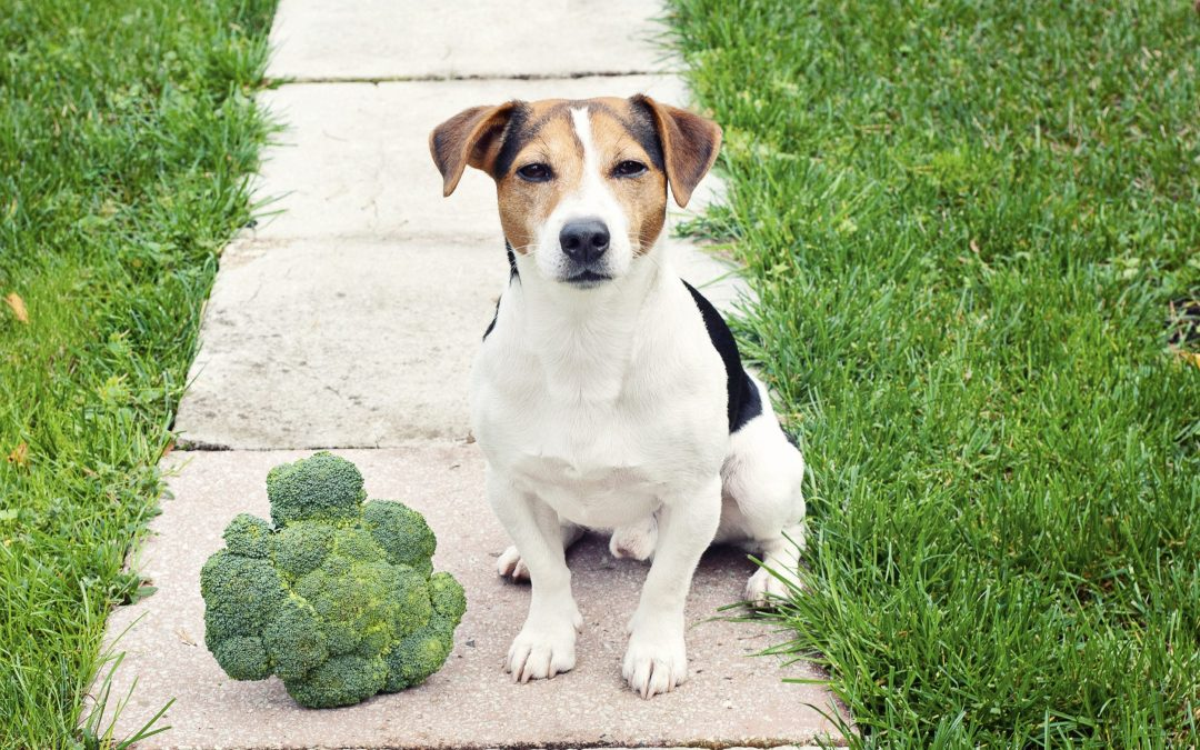 dog with broccoli