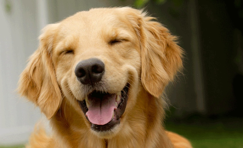 Image result for pic of a happy dog