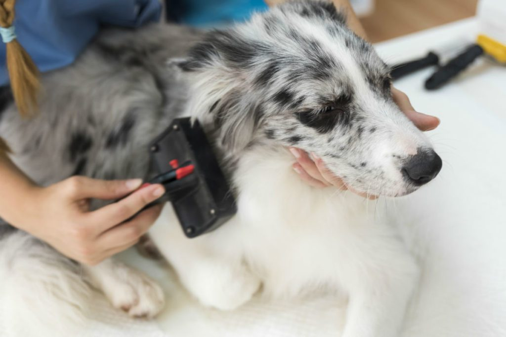 how to improve your dogs skin