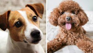 longest living dog breeds