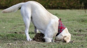 Why Do Dogs Dig Holes
