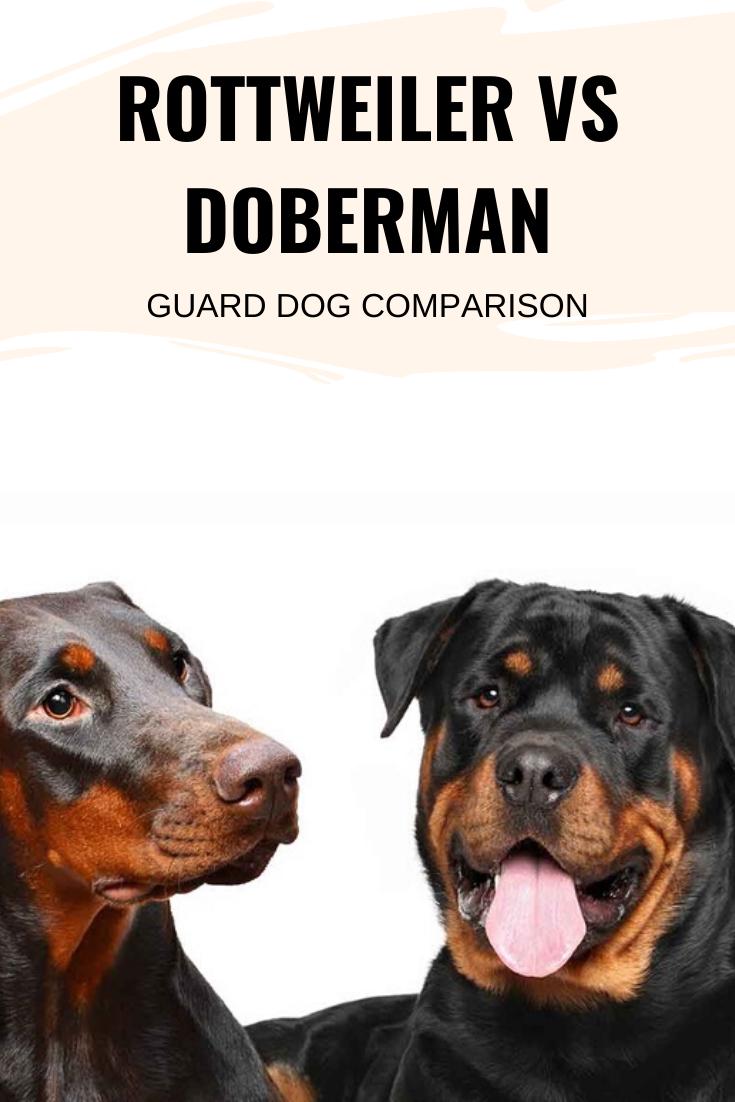 Rottweiler vs Doberman