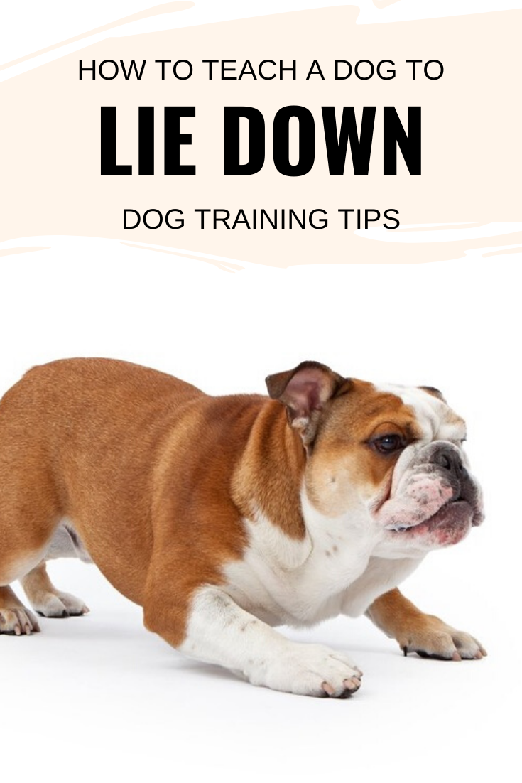 How to teach a dog to lie down