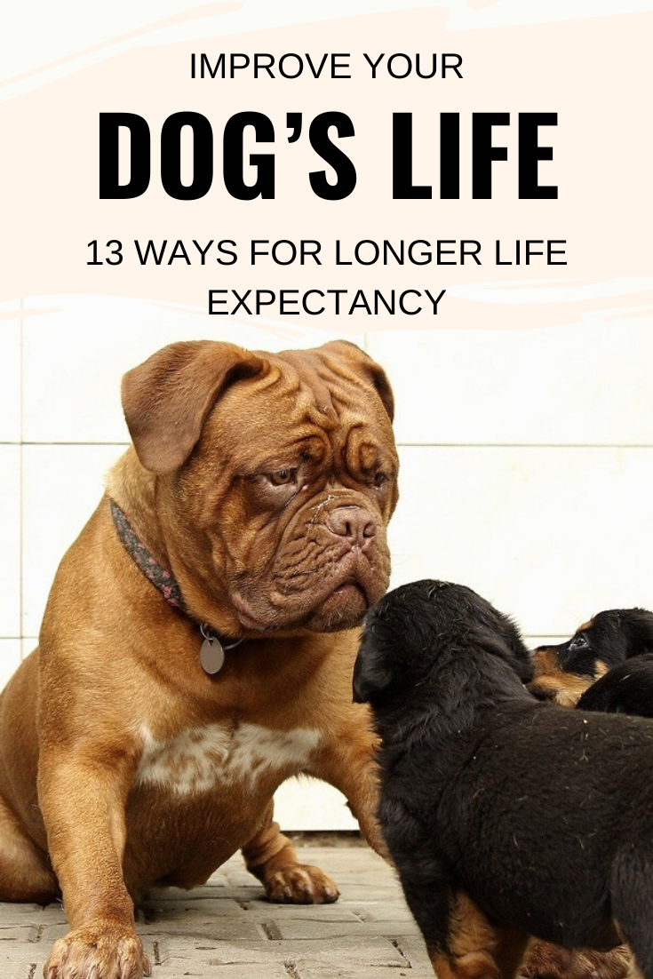 Improve your dogs life