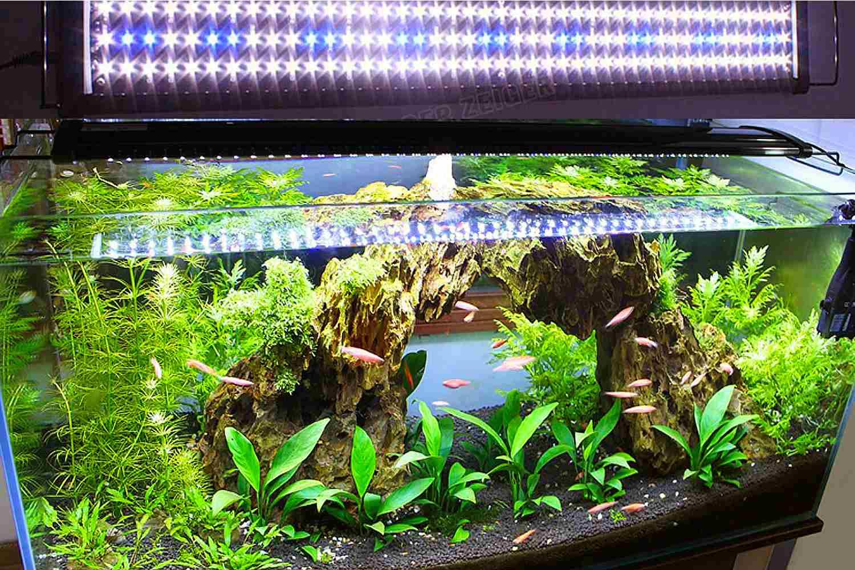 led lights for fish
