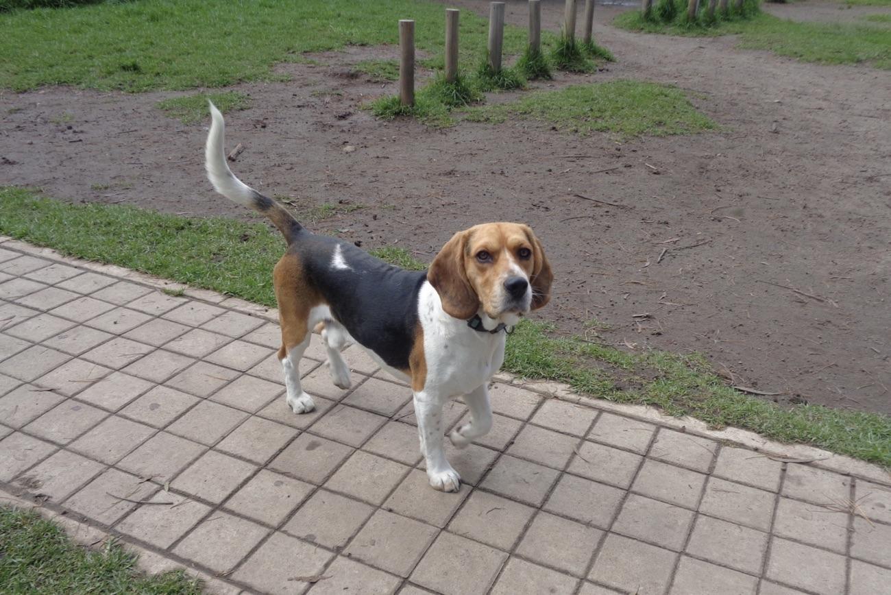 dog in dog park